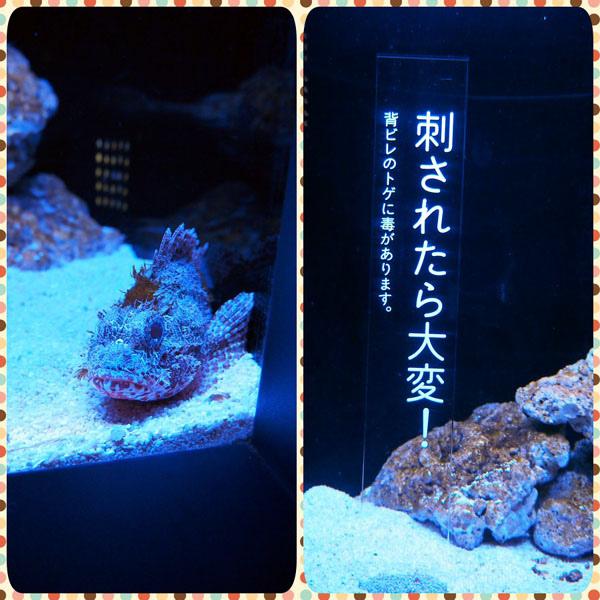 0208 水族館04.JPG