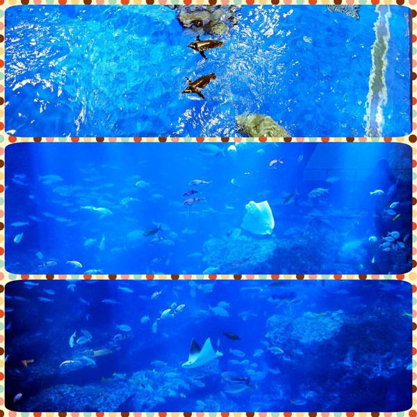 0208 水族館05.JPG