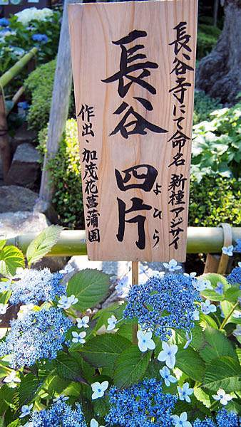 0613 長谷寺08.JPG
