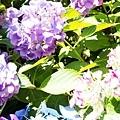 0614 下田公園11.JPG