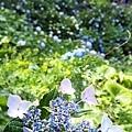 0614 下田公園29.JPG