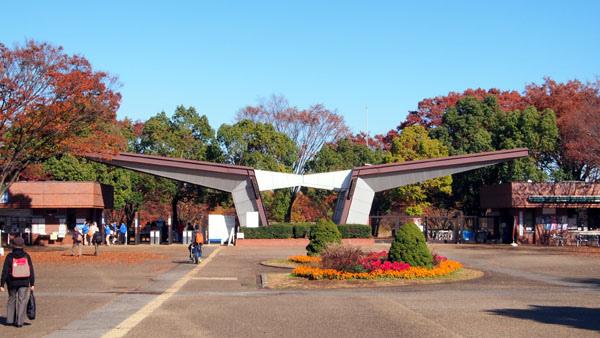1127 昭和記念公園03.JPG