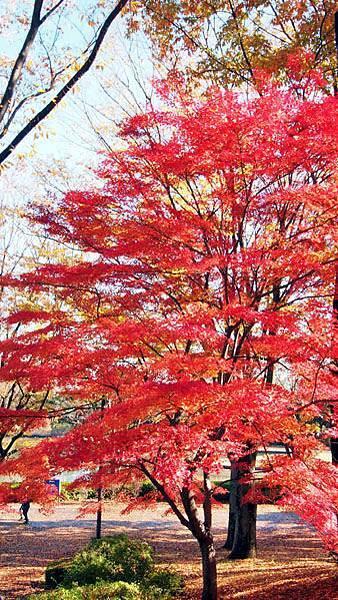 1127 昭和記念公園06.JPG