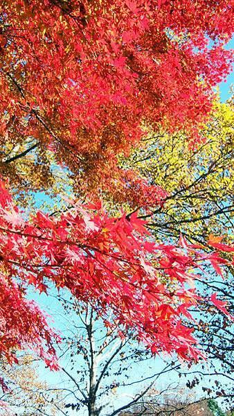 1127 昭和記念公園08.JPG