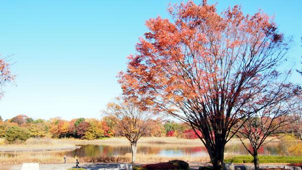 1127 昭和記念公園10.JPG