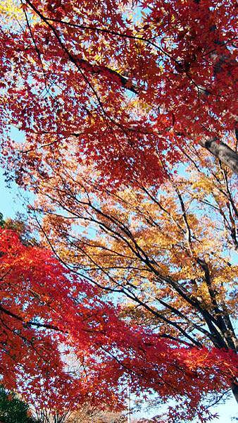 1127 昭和記念公園09.JPG