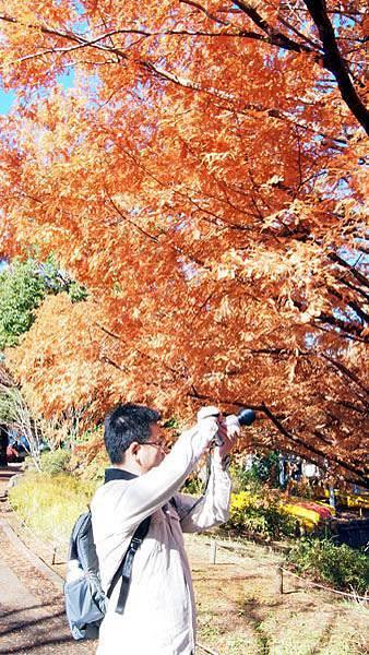 1127 昭和記念公園17.JPG
