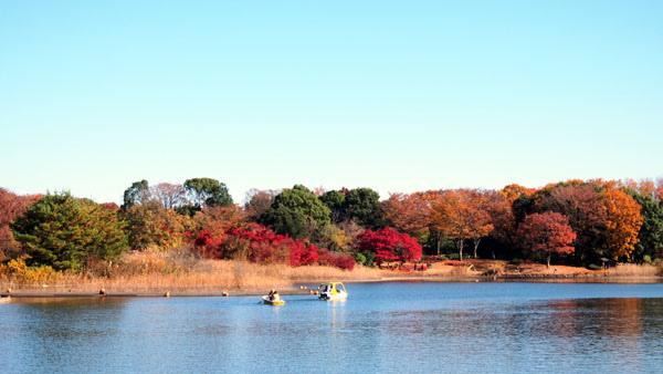 1127 昭和記念公園18.JPG