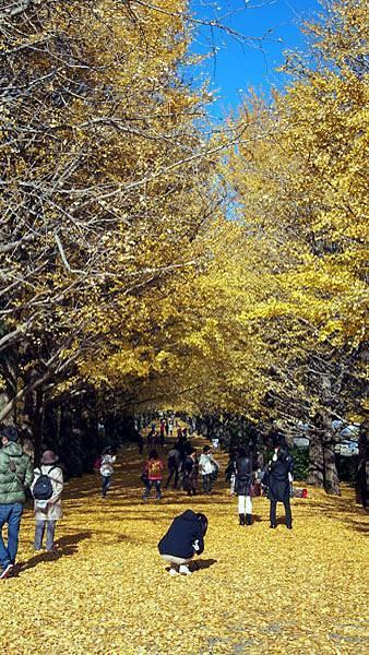 1127 昭和記念公園25.JPG