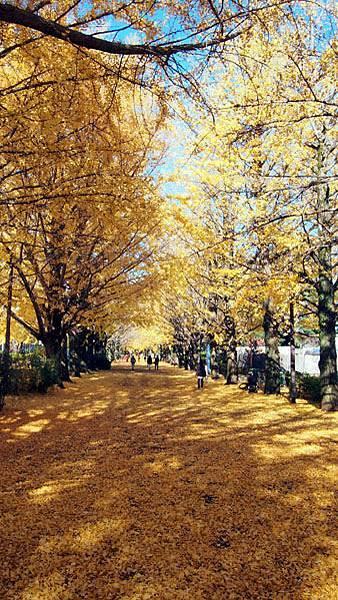 1127 昭和記念公園28.JPG
