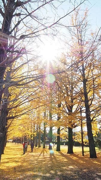 1127 昭和記念公園30.JPG