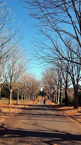 1127 昭和記念公園32.JPG
