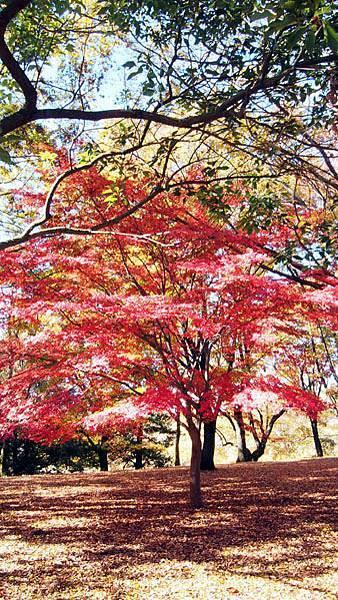 1127 昭和記念公園33.JPG