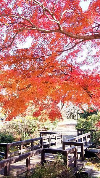 1127 昭和記念公園35.JPG