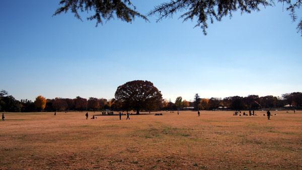 1127 昭和記念公園38.JPG