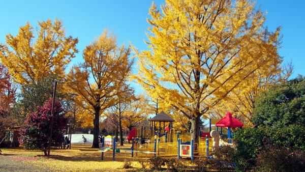 1127 昭和記念公園39.JPG