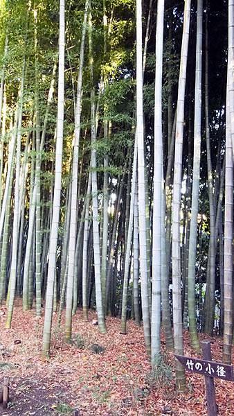殿ヶ谷戶庭園09.JPG
