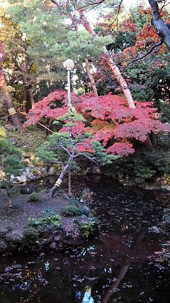 殿ヶ谷戶庭園10.JPG