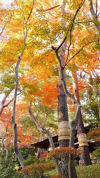 殿ヶ谷戶庭園14.JPG