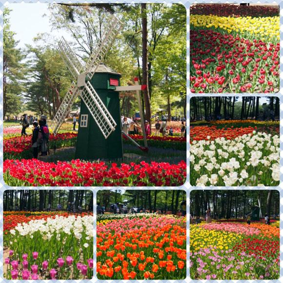 0502 茨城日立海濱公園12.JPG