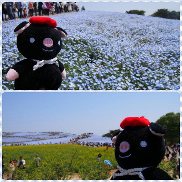 0502 茨城日立海濱公園17.JPG