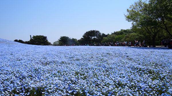 0502 茨城日立海濱公園21.JPG