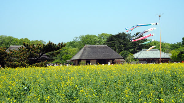 0502 茨城日立海濱公園20.JPG