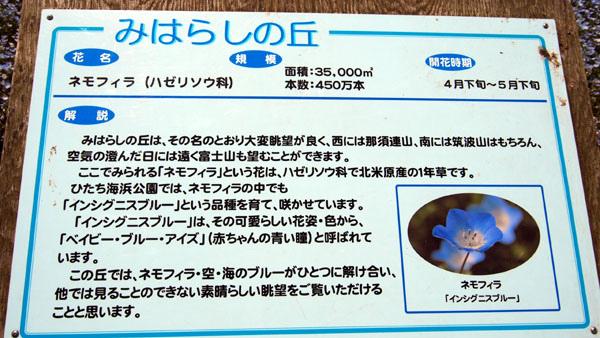 0502 茨城日立海濱公園22.JPG