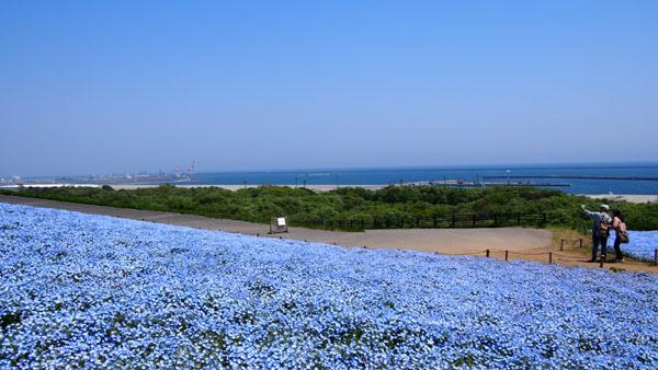 0502 茨城日立海濱公園26.JPG