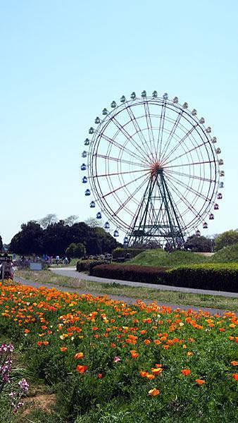 0502 茨城日立海濱公園30.JPG