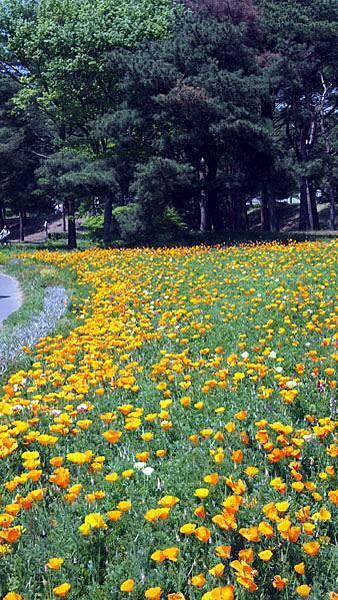 0502 茨城日立海濱公園32.JPG