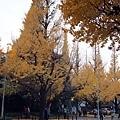 1129 神宮外苑12.JPG