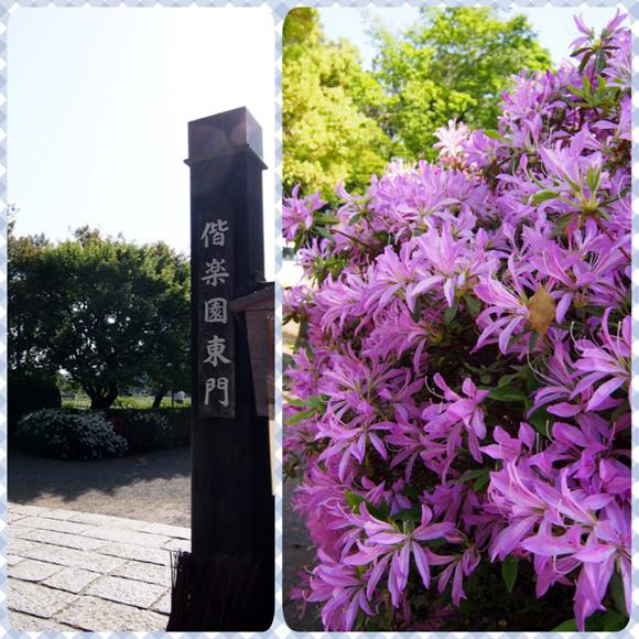 0502 水戶偕樂園20.JPG