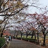 1122-上野不忍池&弁天堂02.JPG