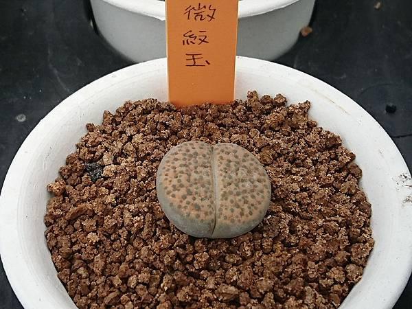 石頭玉06.JPG