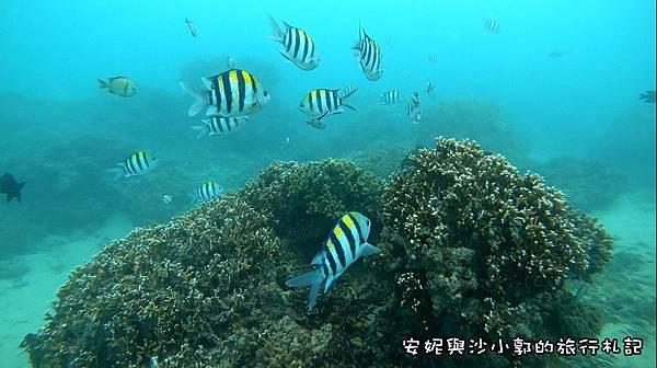 潛水1.JPG