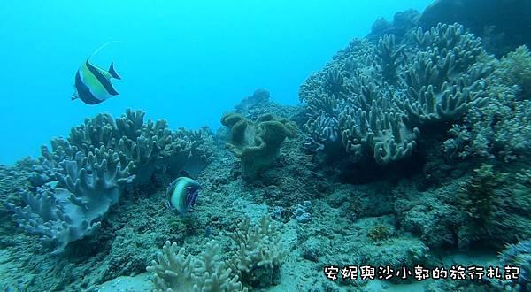 潛水3.JPG