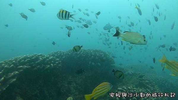 潛水12.JPG