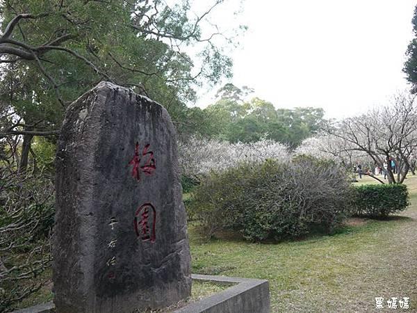 清大梅園 (1).JPG