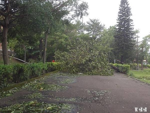 蘇迪勒颱風 (1).jpg