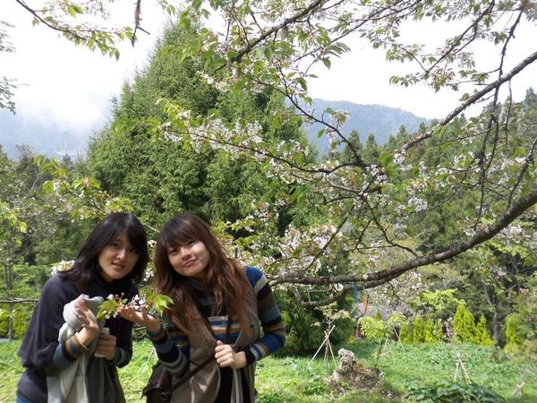 櫻花樹下我孟.JPG