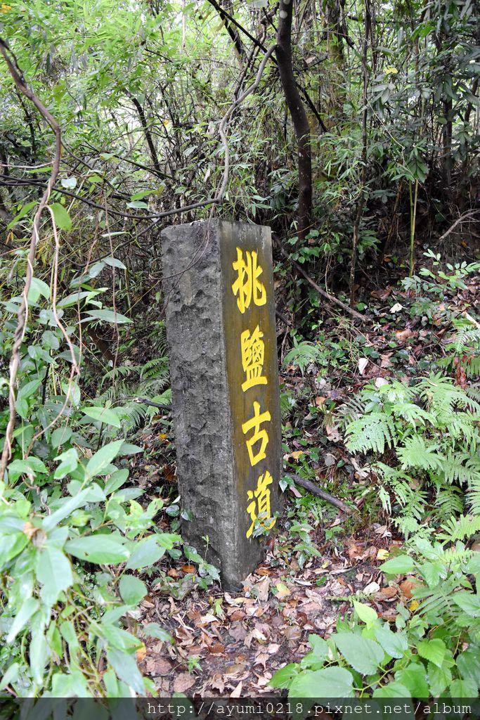 DSC_7034.JPG