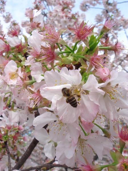 連蜜蜂都可以拍的好清楚哦~