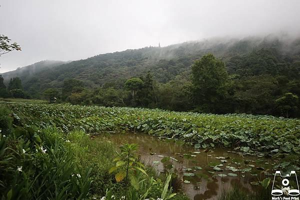 苗栗向天湖7.jpg