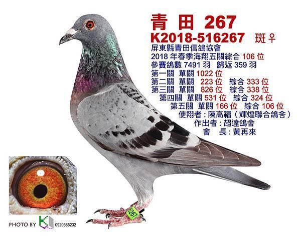 青田267