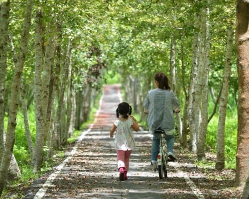 大富平地森林北自行車道