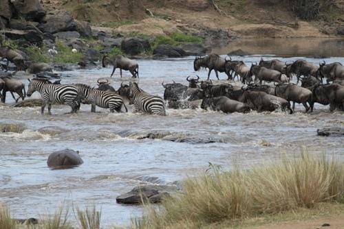 馬賽馬拉動物保護區