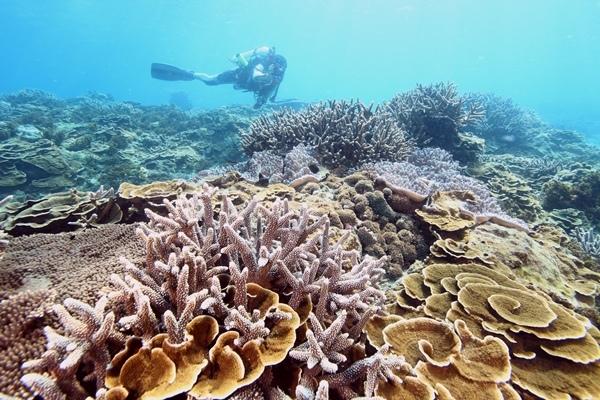 海洋國家公園管理處 圖片提供.JPG