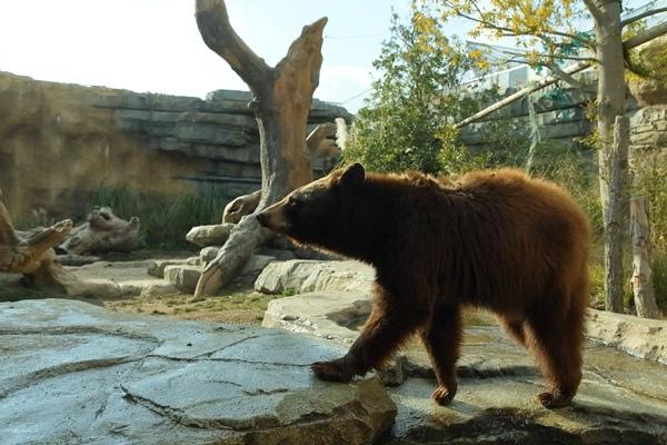 北美黑熊.JPG
