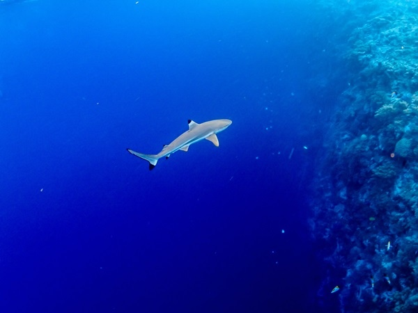 P306124鯊魚城.jpg